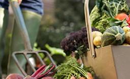 Какие работы следует спланировать в саду на октябрь-ноябрь