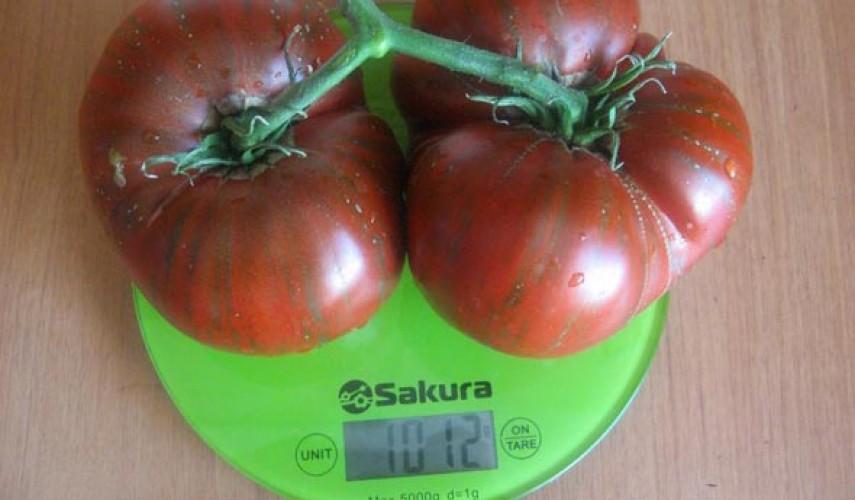 Сорт томатов Полосатый шоколадный