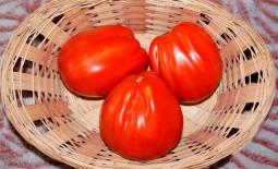 Томат Сердце Италии: детальное описание сорта, выращивание, отзывы