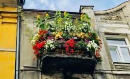 10 секретов успешного балконного огорода