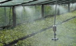 Туманообразователь для теплиц: как выбрать или собрать своими руками, отзывы садоводов