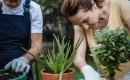 Лучший совет по пересадке растений, который вы когда-либо слышали