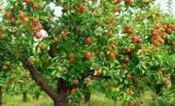 Листопад — сезонное обновление: дуб, рябина, тополь, яблоня