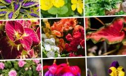 11 тенелюбивых растений которые живут в горшках