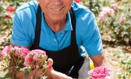 Как посадить и вырастить здоровые и красивые розы в вашем саду