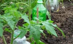 Капельный полив из пластиковых бутылок – универсальная конструкция для домашнего использования: как сделать своими руками