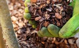 8 причин, по которым необходимо мульчировать сад каждую осень