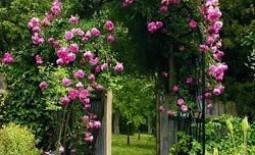 Вертикальное озеленение: ассортимент вьющихся растений для сада