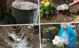 Зола в садоводстве. Как правильно использовать и хранить удобрение для яблонь или груш
