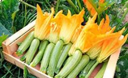 Что посадить в огороде по соседству с кабачками