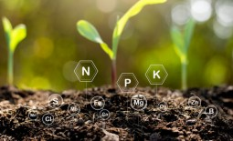 В чем польза гумуса и как повысить его содержание в почве