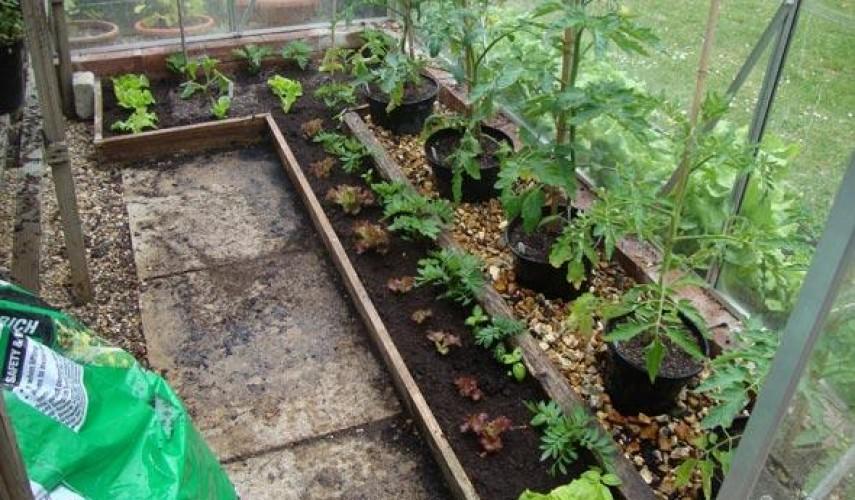 помидоры в теплице из поликарбоната