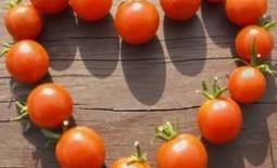 Как вырастить вкусные помидоры в открытом грунте