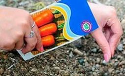 Когда садить морковь: лучшие сроки и сорта для Урала