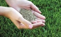 Как правильно подсеивать траву на газон весной и осенью