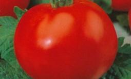 Полбиг F1 – раннеспелый томат из Нидерландов. Характеристика и отзывы огородников