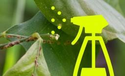Как обнаружить и побороть щитовку на комнатных растениях