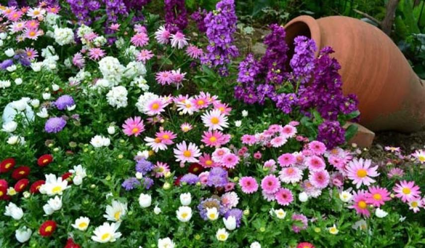 Клумба длительного цветения