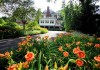 выращивание лилейника