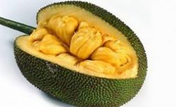 Удивительное хлебное дерево: описание, польза и техника выращивания джекфрута