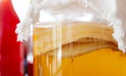 Чайный гриб: какую пользу приносит организму, правила ухода и употребления, выращивание с нуля