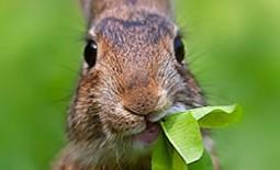 Кормушки разных видов для питания кроликов. Как сделать самостоятельно