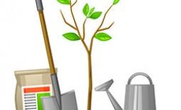 Осенние хлопоты в саду: подкормка деревьев и кустарников