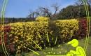 13 растений для вечнозеленых изгородей