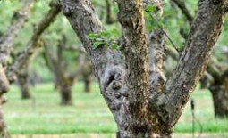 Как определить болезни плодовых деревьев и провести их лечение