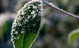 Правила обработки кустарников осенью. Что нужно успеть сделать до морозов