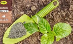 Виды фосфорных удобрений. Способы их применения для огурцов и помидоров