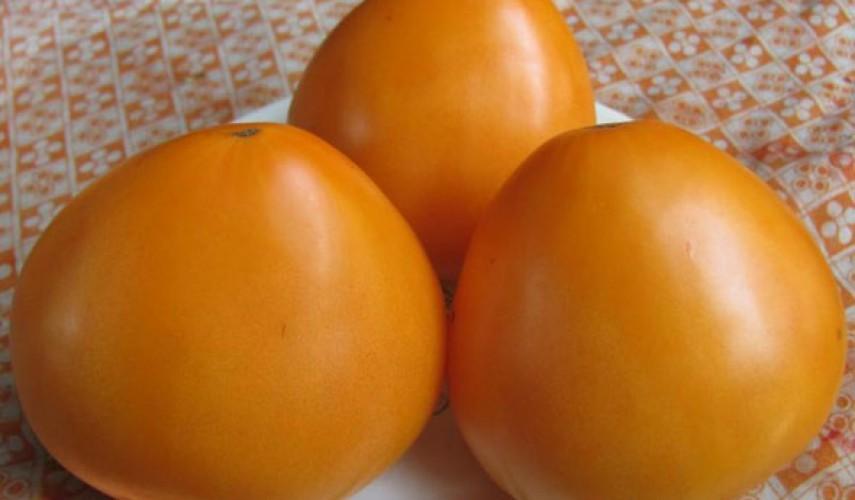 Сорт томата Золотое сердце
