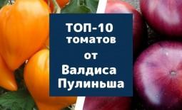 Топ-10 томатов от эксперта и коллекционера Валдиса Пулиньша