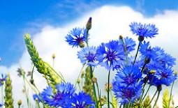 Популярные низкие однолетние цветы, которые долго цветут