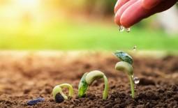 Способы стратификации семян в домашней обстановке