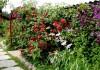Вьющиеся растения для сада