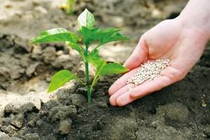 Как подготовить почву к весенней подкормке растений