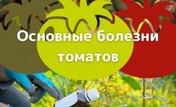 Болезни томатной рассады. Как определить недуги и лечить помидоры