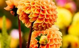 Популярные осенние или поздно расцветающие разновидности цветов: названия