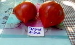 Описание и характеристики томата с крупными плодами Сердце Линнея
