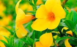Желтые цветы в саду: монохромность или «радуга» на клумбах