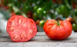 Описание крупноплодного томата Чемпион веса