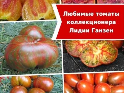 Любимые томаты эксперта и коллекционера Лидии Ганзен: Топ-10 самых, самых