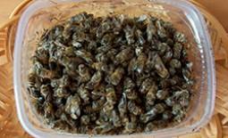 Настойка из пчелиного подмора: полезные свойства, приготовление и использование