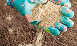 Применение доломитовой муки для улучшения почвы