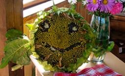 Свободу творчеству! ТОП-10 идей декорирования дачной веранды