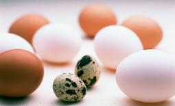 В чем куриные яйца проигрывают перепелиным? Все о пользе и вреде натурального источника белка