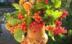 Рябина, вишня, бузина и сирень – это деревья или кустарники?