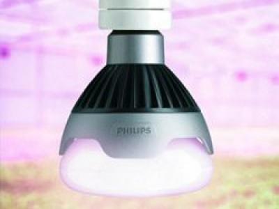 Как правильно выбрать хорошую лампу для досвечивания рассады