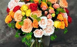 Розы спрей: описание, обзор лучших сортов